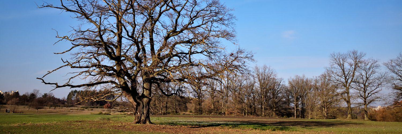 Dendrophilia - Büro für Bäume, Ökologie, Naturschutz und Umweltbildung